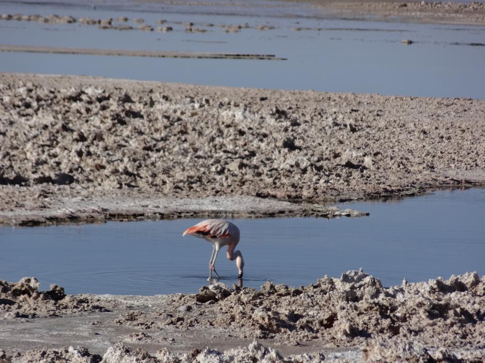 Salar de Atacama (Foto: Sandra Scigliano)