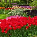 Keukenhof – Os incríveis jardins de tulipas na Holanda