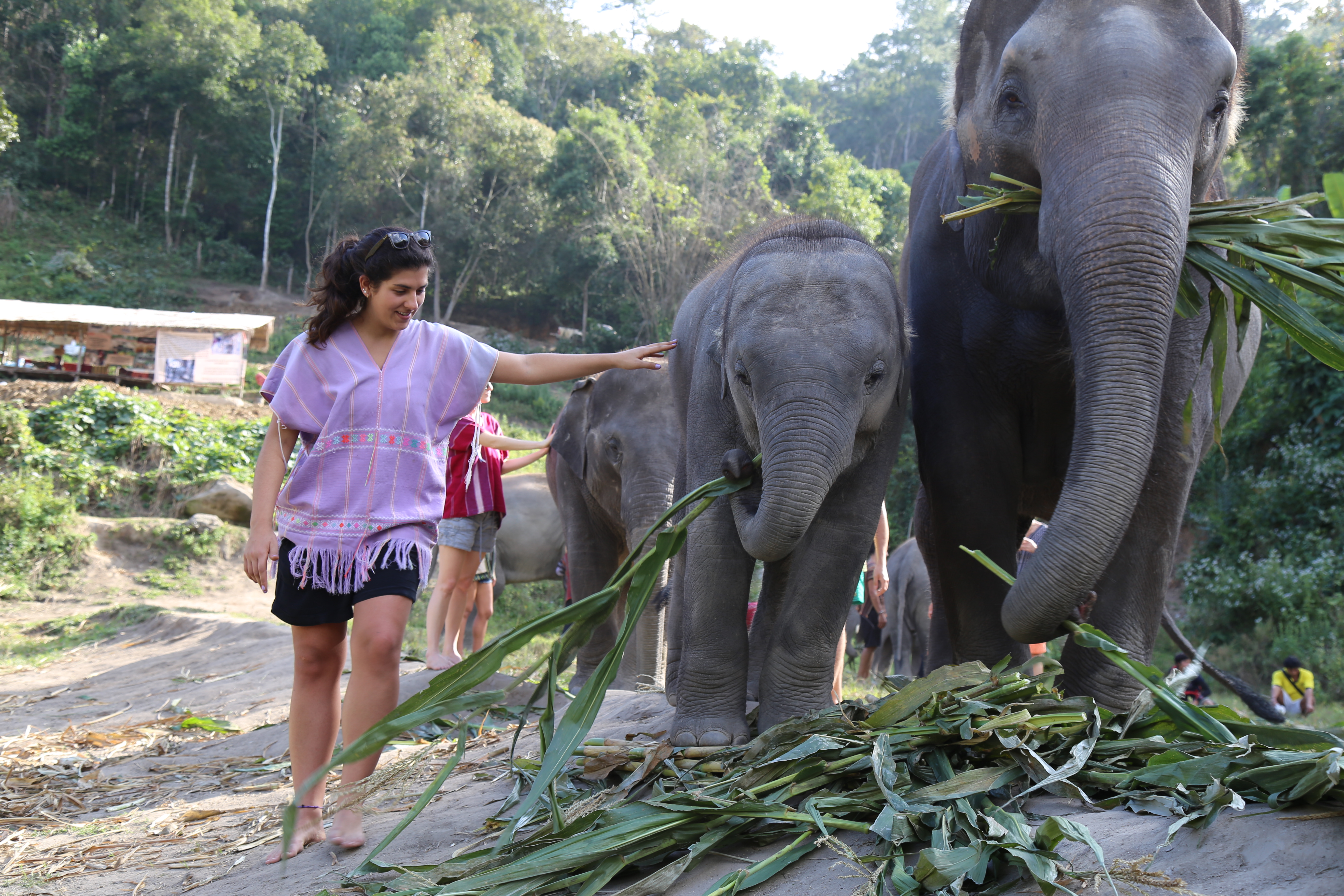 Passei o dia de Natal rodeada por elefantes! (Foto: Nathalia Tavolieri / Viagem em Detalhes)
