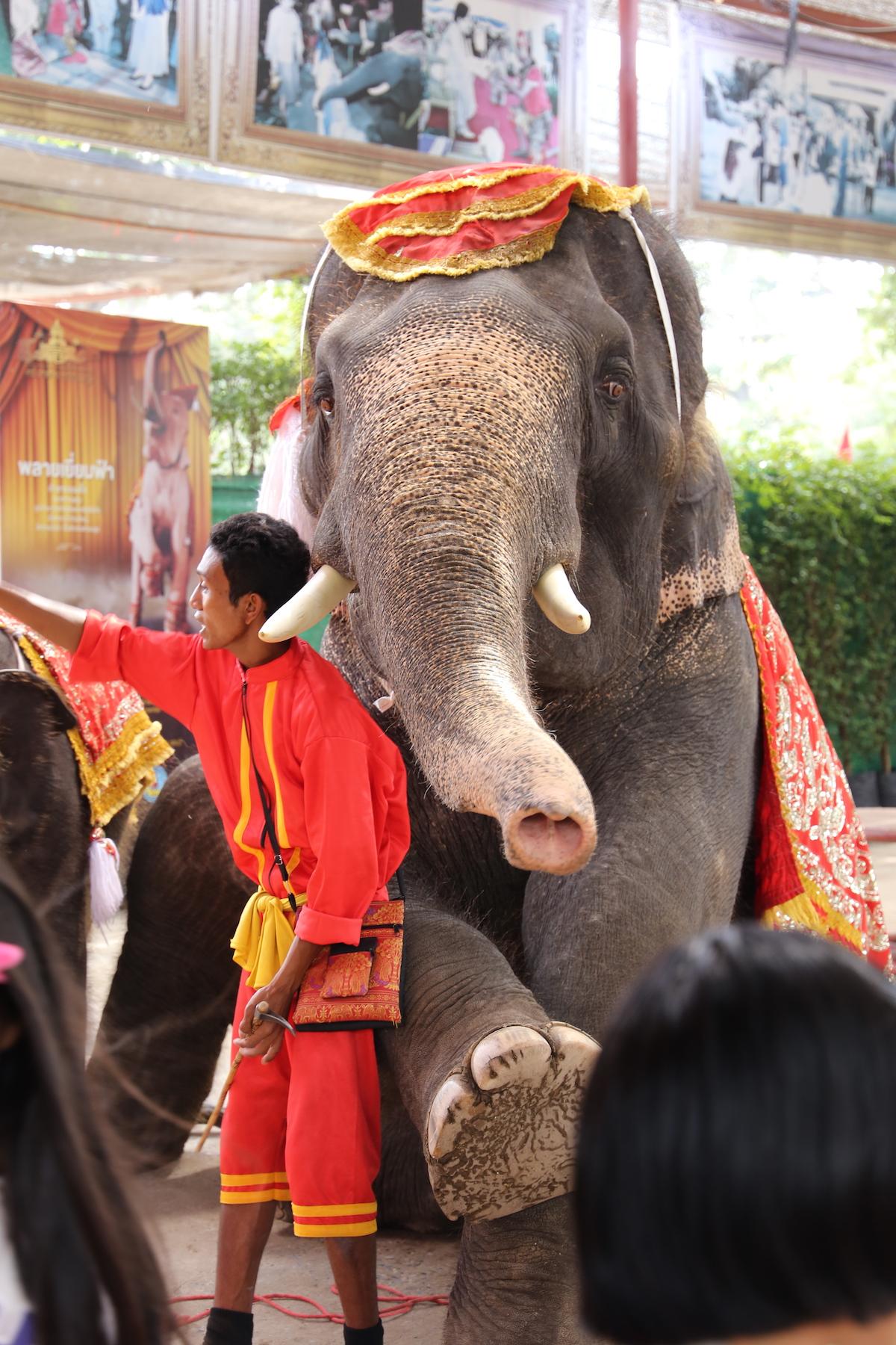 Show de elefantes em Ayutthaya, na Tailândia. (Foto: Nathalia Tavolieri / Viagem em Detalhes)