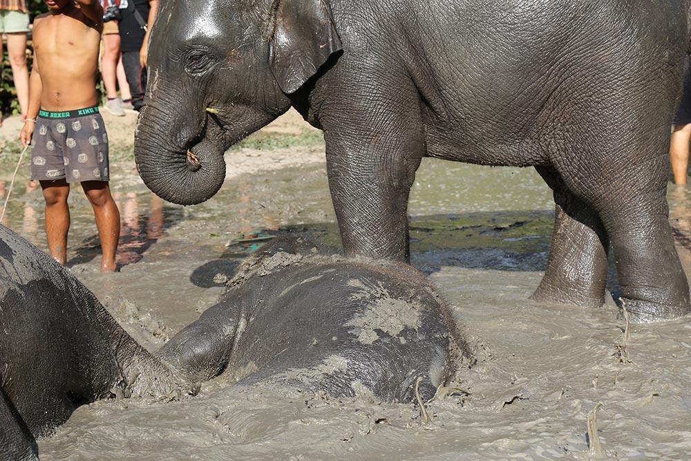 Descubra porque você não deve montar nos elefantes na Tailândia e como visitar esses animais de maneira responsável no post!