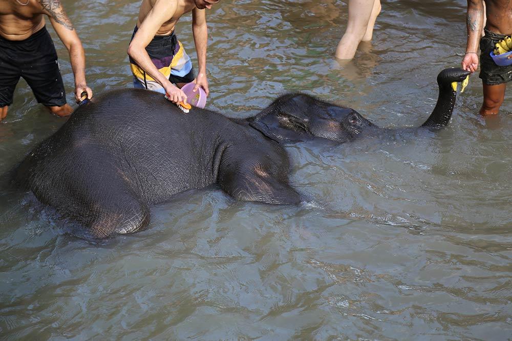 Descubra como conhecer os elefantes na Tailândia de maneira responsável no post!