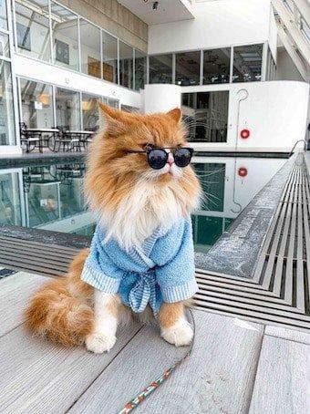 Hotel pet friendly Hiton